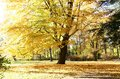 Autumn In The Park Royalty Free Stock Images - 34544509