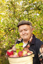 Older Man Picked Apples Stock Images - 34579434