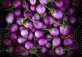 Purple Eggplant Violet King Royalty Free Stock Photo - 34602695