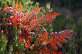 Red Autumn Fern Stock Image - 34606001