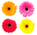 Set Of Gerbera Flowers Isolated On White Stock Photo - 34610350