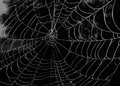Spider Web Royalty Free Stock Image - 34697046