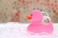 Pink Rubber Duck Stock Image - 34705631
