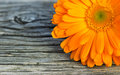 Marigold Stock Photography - 34717302