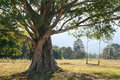 Big Tree With Swing Royalty Free Stock Photography - 34719627