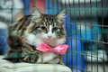 Cat Show Distribution Of Animals From The Shelter Royalty Free Stock Photos - 34787918