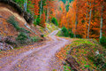 Pathway Through The Autumn Forest Stock Image - 34789301