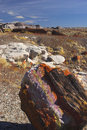 Petrified Forest Stock Photo - 3484460