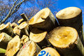 Pile Of Wood In Forest Stock Images - 34818604
