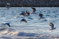 Seagulls, Birds In The Wild. Stock Image - 34825271