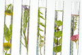 Tests Tubes Solution Of Medicinal Plants And Flowers - Royalty Free Stock Photos - 34859718