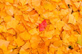 Autumn Leaves Background Royalty Free Stock Image - 34872706