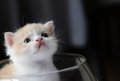 Kitty In Glass Stock Images - 34873204
