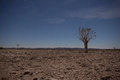 Generic Desert Scene With Quiver Tree At Midnight Stock Photography - 34924802