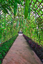 Calabash Or Bottle Gourd Tunnel Stock Photography - 34935032