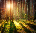 Misty Old Forest Stock Photography - 34940732