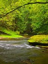 Mountain Stream In Fresh Green Leaves Forest After Rainy Day.  Royalty Free Stock Image - 34993396