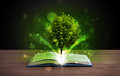 Open Book With Magical Green Tree And Rays Of Light Royalty Free Stock Images - 34998789