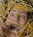 Needle In Haystack Royalty Free Stock Image - 357136