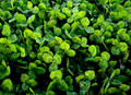 Clover Stock Image - 357991
