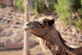 Camel Stock Photography - 35009602