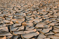 Parched Land Stock Photography - 35010152