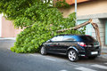 Broken Tree On A Car, After A Wind Storm. Stock Photo - 35024420