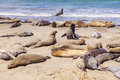 Elephant Seals At The Beach Near San Simeon, California Stock Image - 35043161