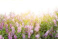 Flower Background With Sun Rays. Stock Photography - 35049732