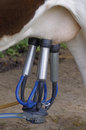 Automatic Milking Machine, Datail. Royalty Free Stock Photography - 35050397