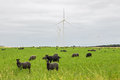 Sheep On Green Pasture, With Wind Turbines In A Distance Royalty Free Stock Images - 35058189