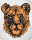 Animal Lioness, Hand-drawing. Vector Illustration. Royalty Free Stock Photos - 35073028