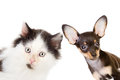 Cat And Dog Looking And Camera Stock Photos - 35081923