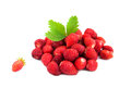 Wild Strawberry Royalty Free Stock Images - 35085079