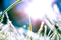 Abstract Image Of Frosty Grass Blades With The Sun Behind Royalty Free Stock Images - 35089549