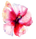 Red Hibiscus Flower Royalty Free Stock Image - 35130266