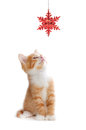 Cute Orange Kitten Playing With A Christmas Ornament On White Stock Photo - 35132050