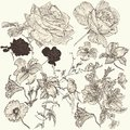 Collection Of Hand Drawn Detailed  Flowers For Design Stock Photos - 35146953