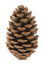 Pine Cone Stock Photography - 35149592