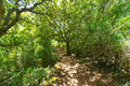 Mediterranean Forest In Menorca With Oak Trees Royalty Free Stock Photos - 35163328