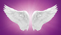 White Angel Wing Isolated Royalty Free Stock Photos - 35179348