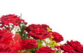 Corner Of Red Roses Royalty Free Stock Images - 35191449