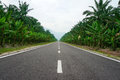 Road Lined In Palm Trees Royalty Free Stock Image - 35226416