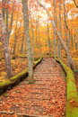 Boardwalk In Autumn Forest Royalty Free Stock Photos - 35227708