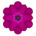 Purple Kaleidoscopic Primrose Flower Mandala Isolated On White Stock Photography - 35231022