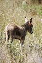 Young Donkey Royalty Free Stock Photos - 3537478