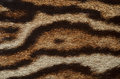 Jaguar fur closeup Royalty Free Stock Photo