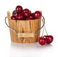Only Collected Sweet Cherries In A Wooden Bucket Royalty Free Stock Photography - 35302347