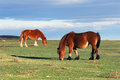 Two Horses Stock Images - 35324714