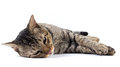 Sleepy Cat Stock Photography - 35326702